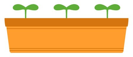 Vector image of three green sprouts growing in orange planter.