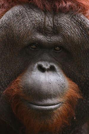 ape photo