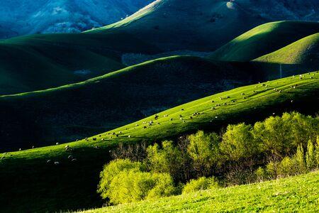 Grassland scenery in Xinjiang