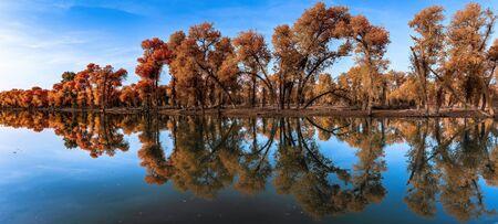 China's Xinjiang Poplar National Park