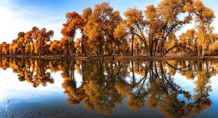 October 2018 China's Xinjiang Poplar National Park