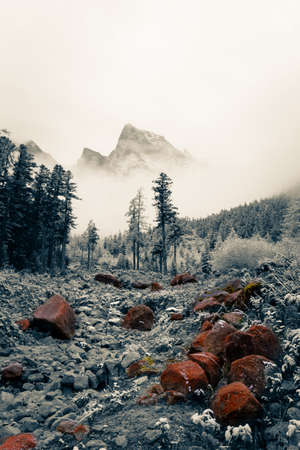 In Bipengou, Abali County, Sichuan, during the National Day, the mountain was covered by clouds and mist, like a fairyland during the National Day.