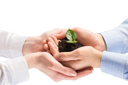 Eenheid van ondernemers te beschermen kleine spruit met handen