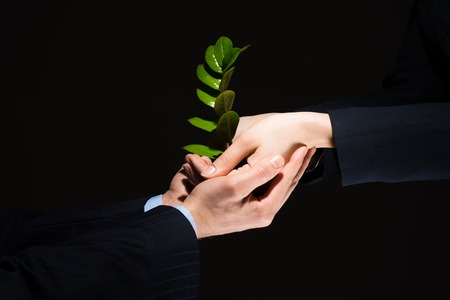 growing partnership: Unity of businesspeople protecting small sprout with hands