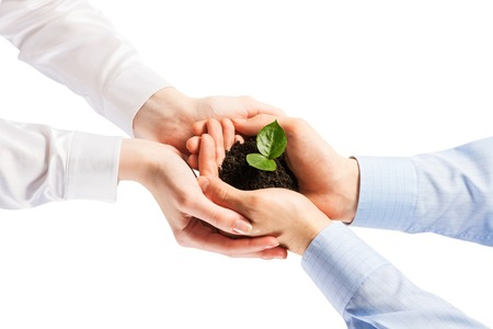 Unity of businesspeople protecting small sprout with hands Stock Photo