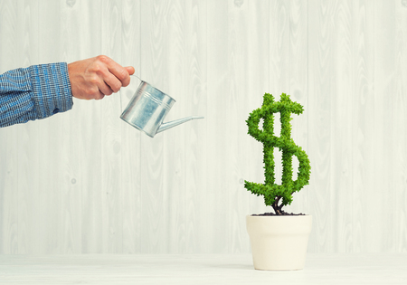 Hand of man watering green dollar tree growing in white pot