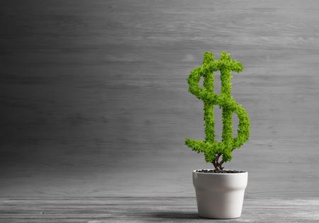 Green dollar tree growing in white pot