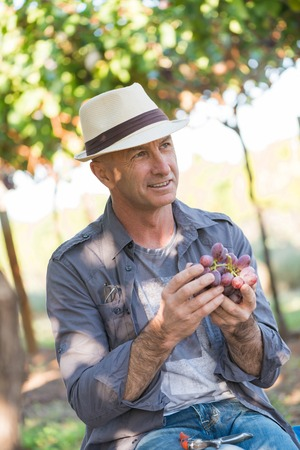 Winegrower man in straw hat holding bunch of red grapes. Traditional and natural winery farm. Adult harvester working in vineyard. Harvest time in winery industry. Viticulture and enology