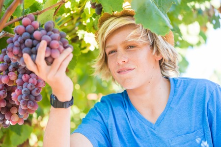 Young winemaker in straw hat examining grapes during vintage. Traditional winery culture and winemaker business. Guy looking at bunch of red grapes in vineyard. Farmer boy posing in garden Stock Photo