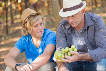 Agricultural checking quality wine grapes in vineyard. Winemaker examining wite grapes. Traditional winery business. Wine grower examining grapes before harvesting. Organic grapes production
