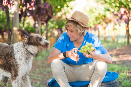 Smiling boy with dog in vineyard at sunny day. Caucasian guy holding secateurs and bunch of white grapes. Young farmer with freshly grapes. Seasonal agricultural worker harvesting ripe grapes.