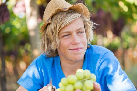 Boy in hat and blue t-shirt harvesting ripe grapes in garden. Guy holding bunch of white grapes in vineyard at sunny day. Young farmer with freshly harvested grapes. Portrait of agricultural worker