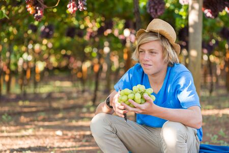 Smiling blond boy in hat harvesting ripe grapes in garden. Happy guy holding bunch of white grapes in vineyard at sunny day. Young farmer with freshly harvested grapes. Portrait of agricultural worker Archivio Fotografico - 130086519