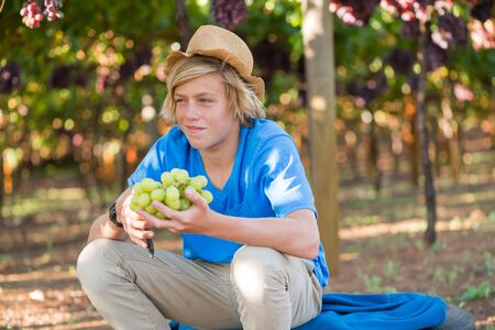 Smiling blond boy in hat harvesting ripe grapes in garden. Happy guy holding bunch of white grapes in vineyard at sunny day. Young farmer with freshly harvested grapes. Portrait of agricultural worker