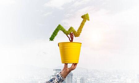 노란색 냄비에 성장 추세의 모양에 녹색 식물. 비즈니스 분석 및 통계. 비즈니스 및 투자를 위한 친화적 생태계. 녹색 식물과 냄비를 들고 인간의 손입니다. 재정적 발전