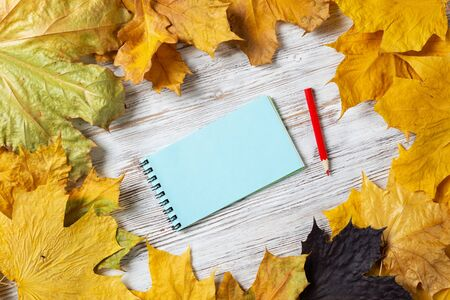 Spiral notepad and pen lies on vintage wooden desk with bright foliage. Flat lay composition with autumn leaves on white wooden surface. Day planning and relaxation. Blank notepaper with copy space Фото со стока