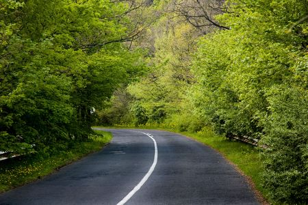 forest road: Winding road in a forest Stock Photo