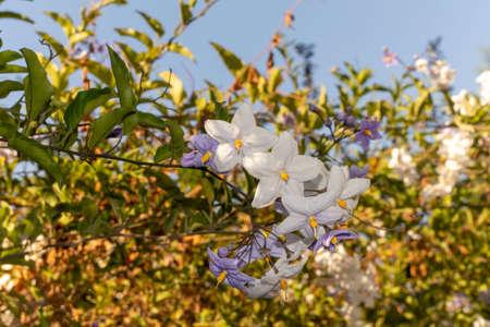 A close up of a flower High quality photo. 免版税图像