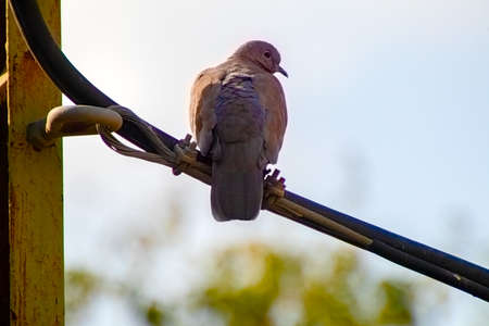 A bird sitting on top of a wooden pole