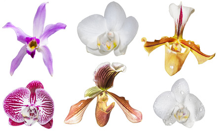 Collection of orchid flowers photo