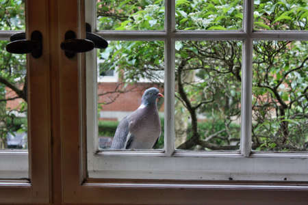 Pigeon perched in a window photo