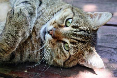 gaze: Cat blik