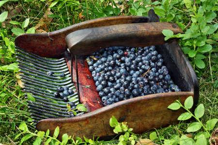 bilberries: Machine to collect bilberries Stock Photo