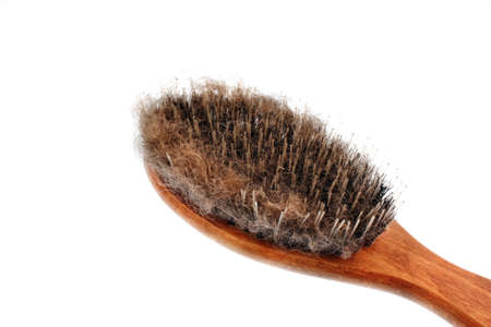 Brush for combing hair escaping dogs photo