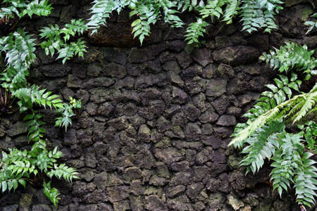 Stone wall with plant tropical  fern background photo