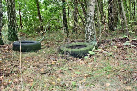 Tires thrown in the woods photo