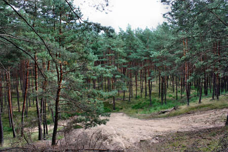 Forest landscape sand tree mountain photo