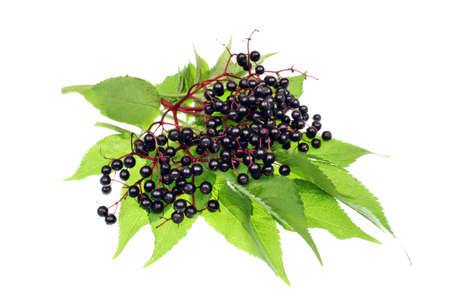 Elderberry fruit on a white background Stock Photo