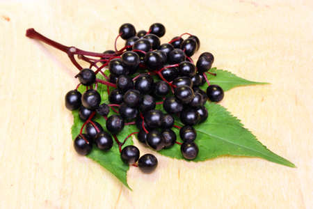 Therapeutic elderberry fruits on wooden background