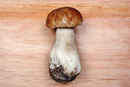 Boletus Edulis on wood background photo