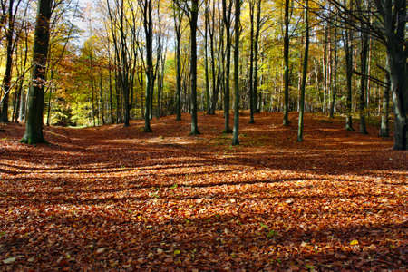 Landscape autumn in the forest photo