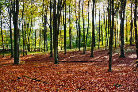 Autumn scene in the forest photo
