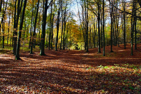 Colors of the forest in autumn photo