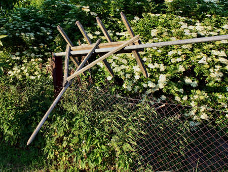 frequent: Old wooden rake hung on the fence elderberry blossoms in the background.