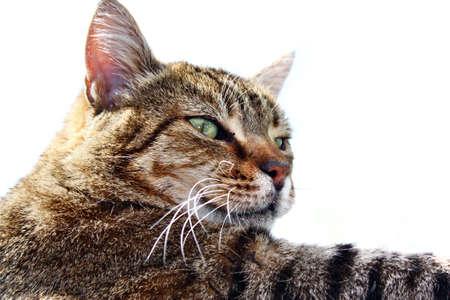 gaze: Cat kitten blik betrekking blik blik hoofd