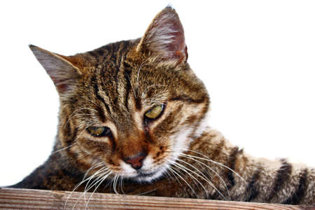 gaze: Cat kitten gaze regard glance look  head