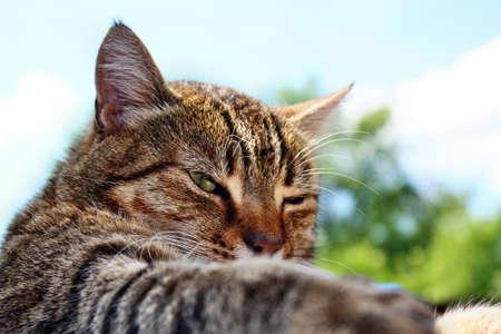 gray cat: Look beautiful gray striped cat