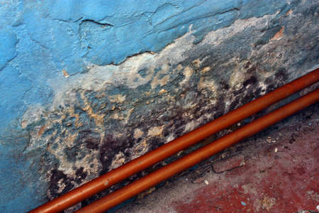 clean lungs: Toxic mold growing on the wall in the room Stock Photo