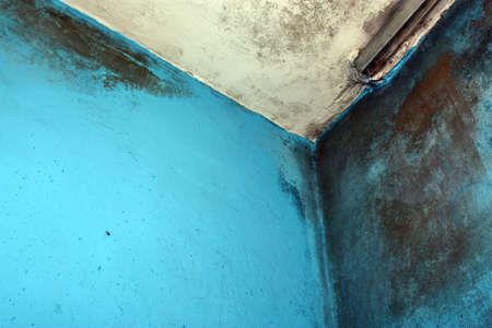 moldy: Moldy walls and ceiling in the room