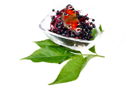 inachis: Fresh fruit elderberry and butterfly Inachis io on white isolated background