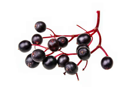 Black elderberry  fresh fruit isolated