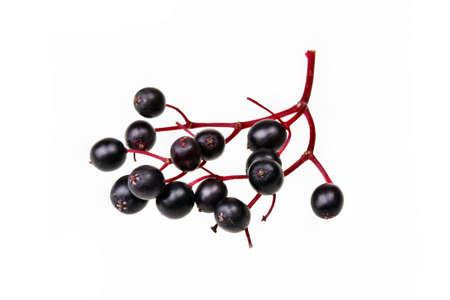 Black elderberry  fresh fruit isolated