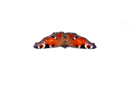 io: Inachis Io, Peacock butterfly on white background Stock Photo