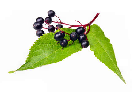 Fresh fruit  black elderberry herb