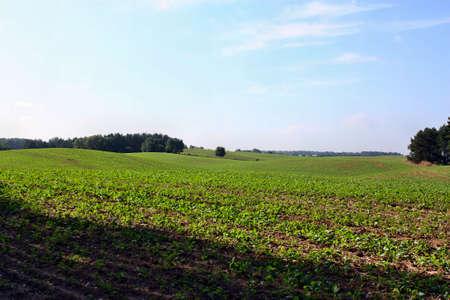 agricultural industry: GMO agricultural industry on a blue sky,