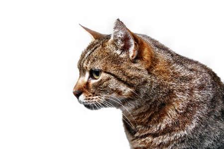 Cat kitten gaze regard glance look  head isolated